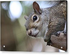 Squirrel Acrylic Print by Jeanne Andrews