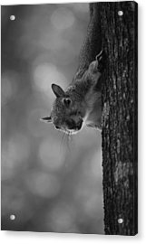 Squirrel On A Tree Acrylic Print by Carrie Munoz