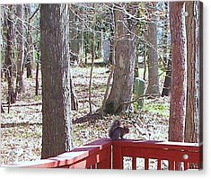 Acrylic Print featuring the photograph Squirrel Waiting by Pamela Hyde Wilson