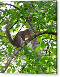 Acrylic Print featuring the photograph Squirrel With Candy by Renee Trenholm