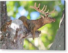 Squirrelk Acrylic Print