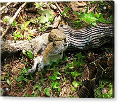 Acrylic Print featuring the photograph Squirrel's End by Doug McPherson