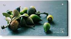 Squirrel's Harvest Acrylic Print