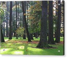 St. John's Trees Acrylic Print
