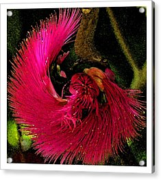 Acrylic Print featuring the photograph St Kitts Flora by Cindy Manero