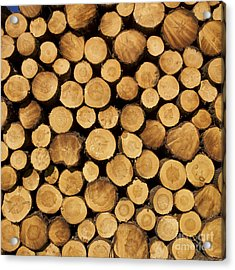 Stack Of Wood Logs. Acrylic Print