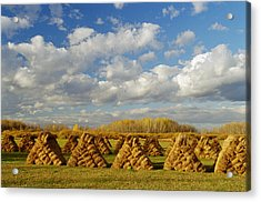 Stacked Hay Bales In Field, Selkirk Acrylic Print by Dave Reede