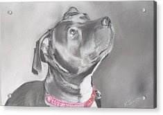 Staffordshire Terrier  Acrylic Print by Karl Simpson