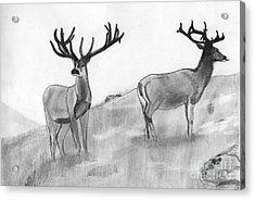 Stag Acrylic Print by Shashi Kumar