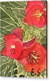 Staghorn Glory Acrylic Print