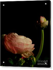 Stalking Petals In The Dark Acrylic Print