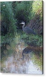Stalking Acrylic Print