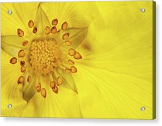 Stamen Acrylic Print by Billy Currie Photography