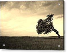 Stand Alone Tree 1 Acrylic Print by Sumit Mehndiratta