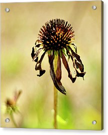 'stand Strong' Acrylic Print by Joanne Brown