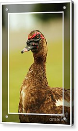 Acrylic Print featuring the photograph Standin Proud by Lori Mellen-Pagliaro