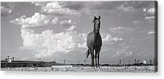 Standing Alone Acrylic Print by Jim  Arnold
