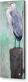 Standing Heron Acrylic Print by Lisa Baack