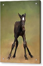 Standing On All Fours Acrylic Print by Davandra Cribbie