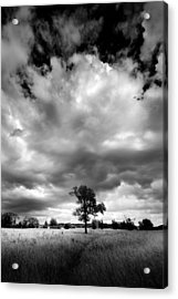 Acrylic Print featuring the painting Standing Out Alone by John Chivers