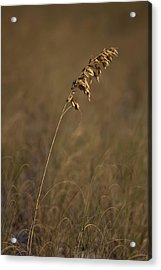 Standing Out Acrylic Print by Nick  Shirghio