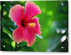 Acrylic Print featuring the photograph Standing Tall by Amee Cave