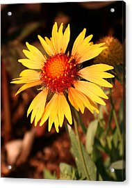 Acrylic Print featuring the photograph Standing Tall by Karen Harrison