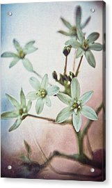 Star Flower Acrylic Print