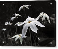 Acrylic Print featuring the photograph Star Flowers by Deborah Smith