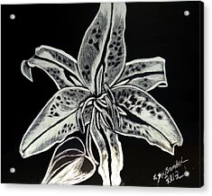 Acrylic Print featuring the drawing Star Gazer Lily by Lisa Brandel