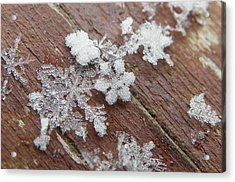 Acrylic Print featuring the photograph Star Shaped Snow Flakes by Chad and Stacey Hall