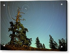 Star Trails, North Star And Old Douglas Acrylic Print by David Nunuk