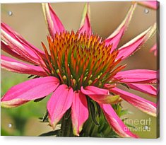 Acrylic Print featuring the photograph Starburst by Eve Spring