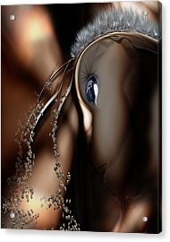 Stare Back Acrylic Print by Steve Sperry