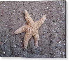 Starfish Acrylic Print by Chad and Stacey Hall