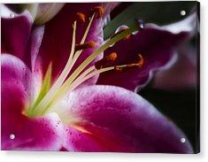 Stargazer Lily Portrait Acrylic Print