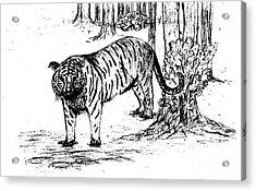 Staring Tiger Acrylic Print by Mashukur  Rahman