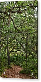 Starkey Woodlands  Acrylic Print by Gregory Colvin