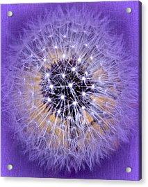 Starry Starry Night Acrylic Print by Richard Cummings