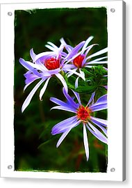 Acrylic Print featuring the photograph Stars Of Spring by Judi Bagwell