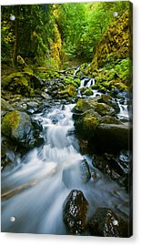 Starvation Creek Falls Acrylic Print by Mike  Dawson