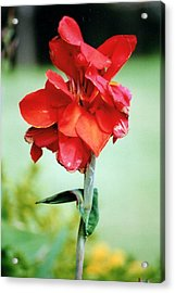 Statuesque By Nature.... Acrylic Print by Tanya Tanski