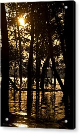 Stay Gold Acrylic Print by Straublund Photography