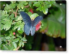 Stealthy Red Acrylic Print