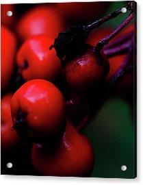 Steamboat Springs Berries Acrylic Print
