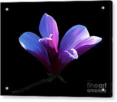 Steel Magnolia Acrylic Print