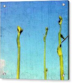 #stems #stem #lily #buds #bud #tall Acrylic Print