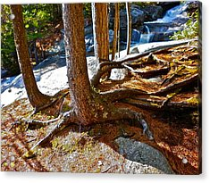 Step Falls Roots Acrylic Print by George Ramos