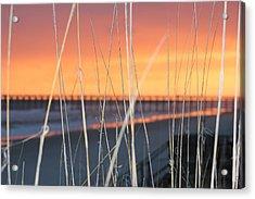 Sticks Acrylic Print by Static Studios