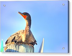 Still Acrylic Print by Barry R Jones Jr